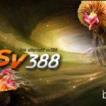 Link Alternatif Login SV388 Sabung Ayam Terupdate