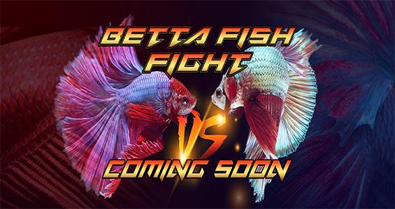 betta fish comming soon